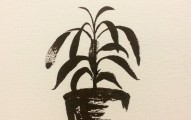 chili_plant_ink_drawing_peter_kawecki_shapeshftr